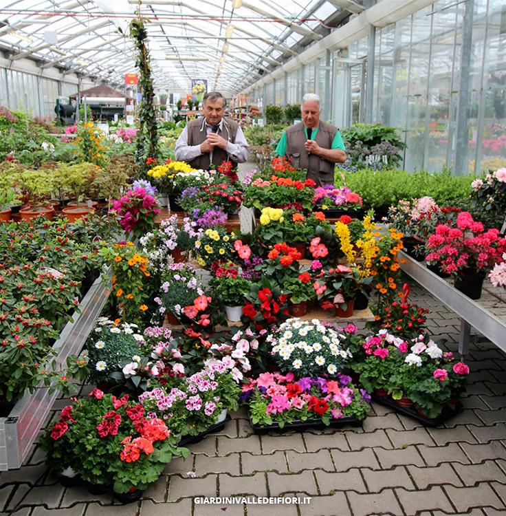 Arboricoltura prodotti e servizi in vendita garden for Vendita piante e fiori