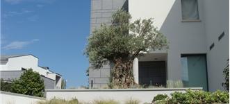 Privati progettazione giardini realizzazione parchi e for Giardini per ville moderne